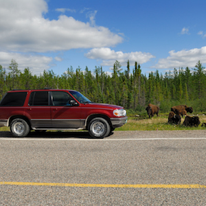 Road Trip in the Mackenzie Bison Santuary on Highway 1