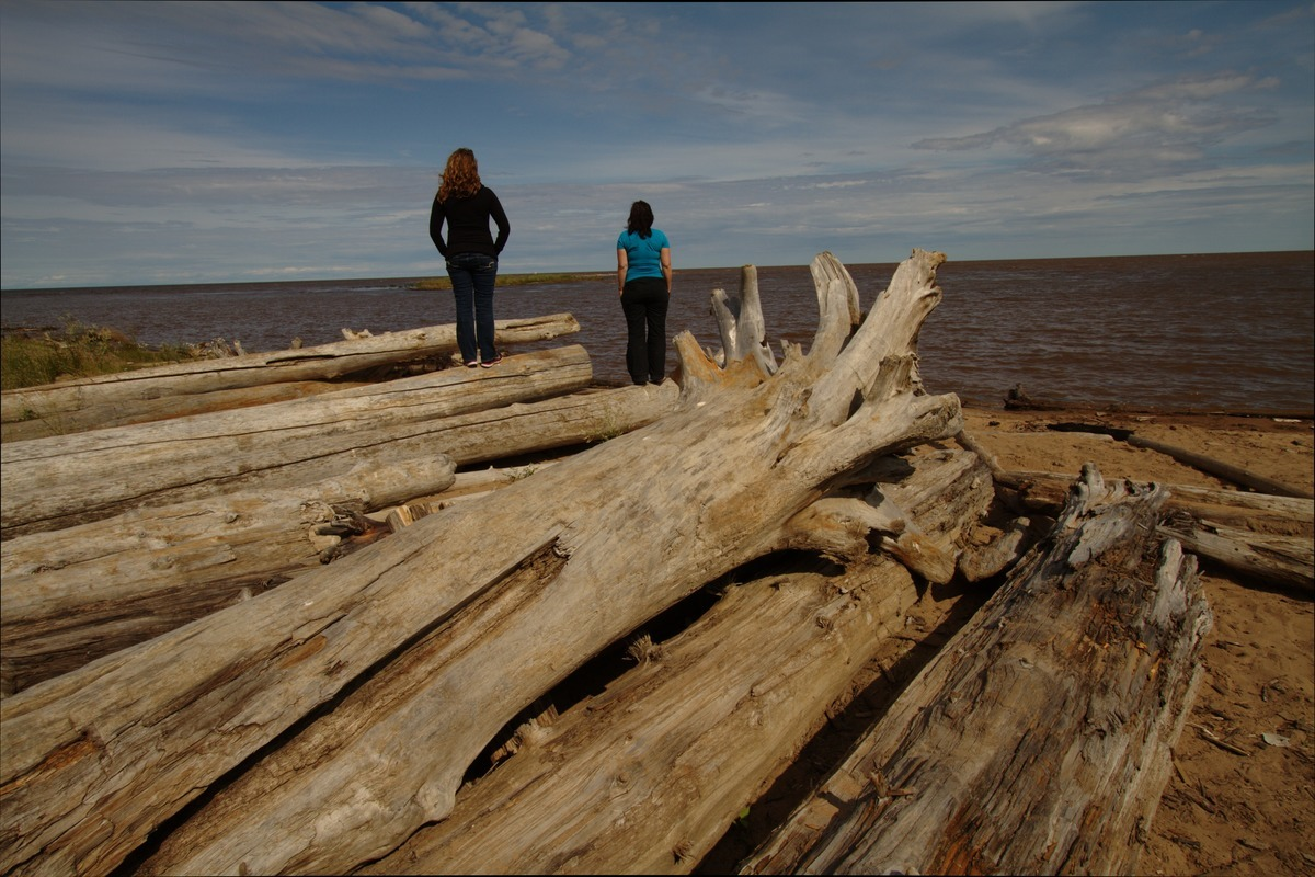 driftwood on hay river beach