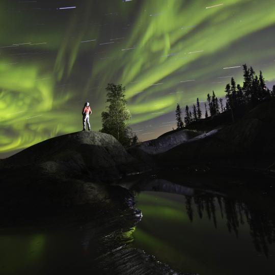 aurora and trees in the Northwest Territories