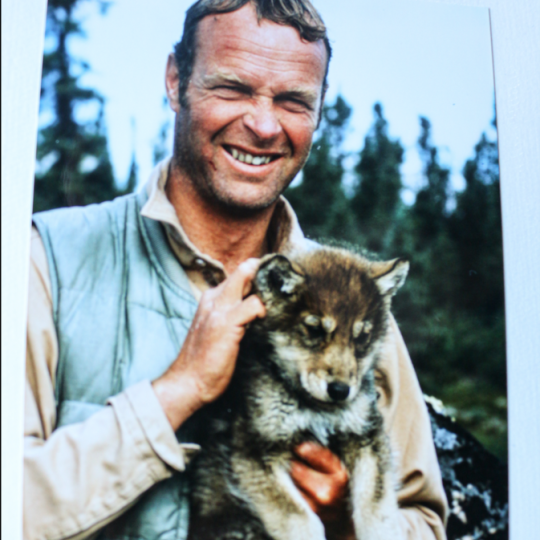 Alex Hall holds a wolf pup in the Barrenlands, Northwest Territories