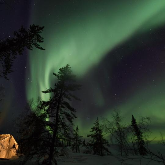 The green aurora across the sky with trees and a Yellowknife Online lit up tent in the Northwest Territories.