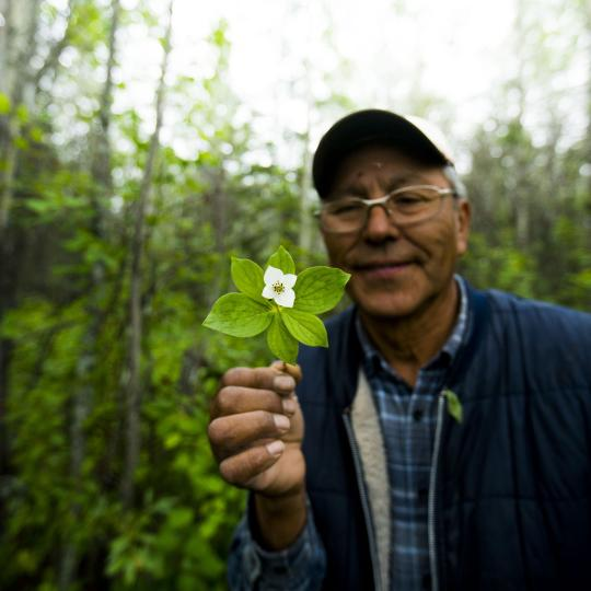 Bobby Norwegian owner of Tah Chay Adventures Indigenous tourism operator holding up a white flowered plant local to Fort Simpson Northwest Territories.