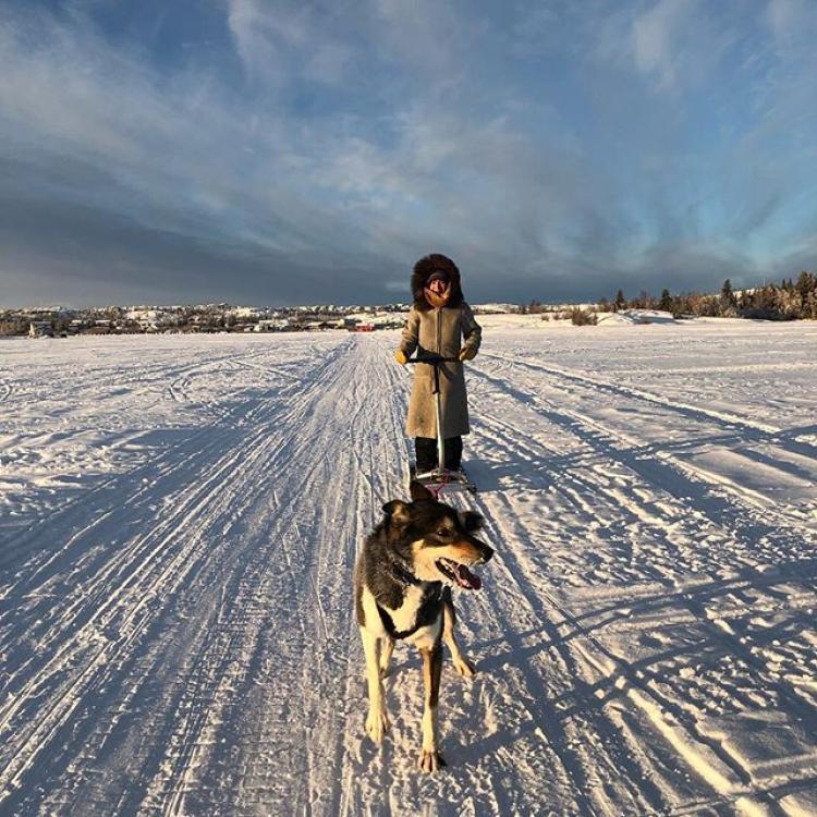 Kicksledding on Great Slave Lake, husky.