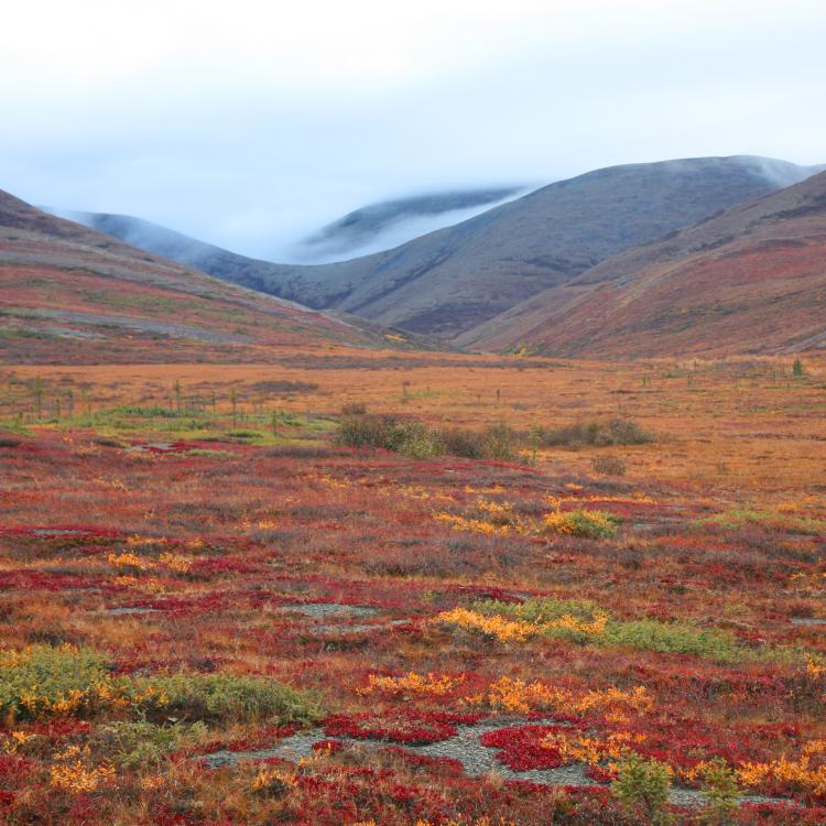 Northern Nature Photography's picture of western arctic landscape in the fall colors with pingos.