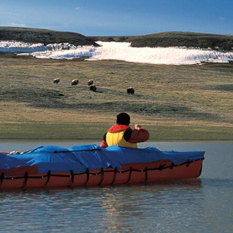 Thomsen River in Aulavik National Park