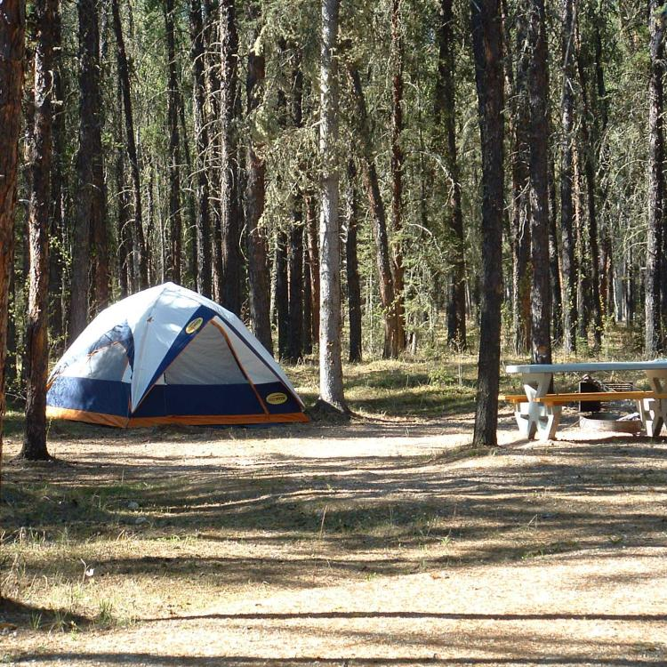 A tent pitched in the forest in Queen Elizabeth Territorial Park