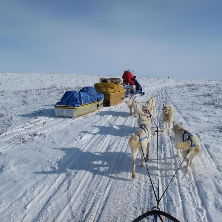 Arctic Adventure Tours dog sledding with man on skidoo snowmobile transporting supplies in winter in Inuvik Northwest Territories.