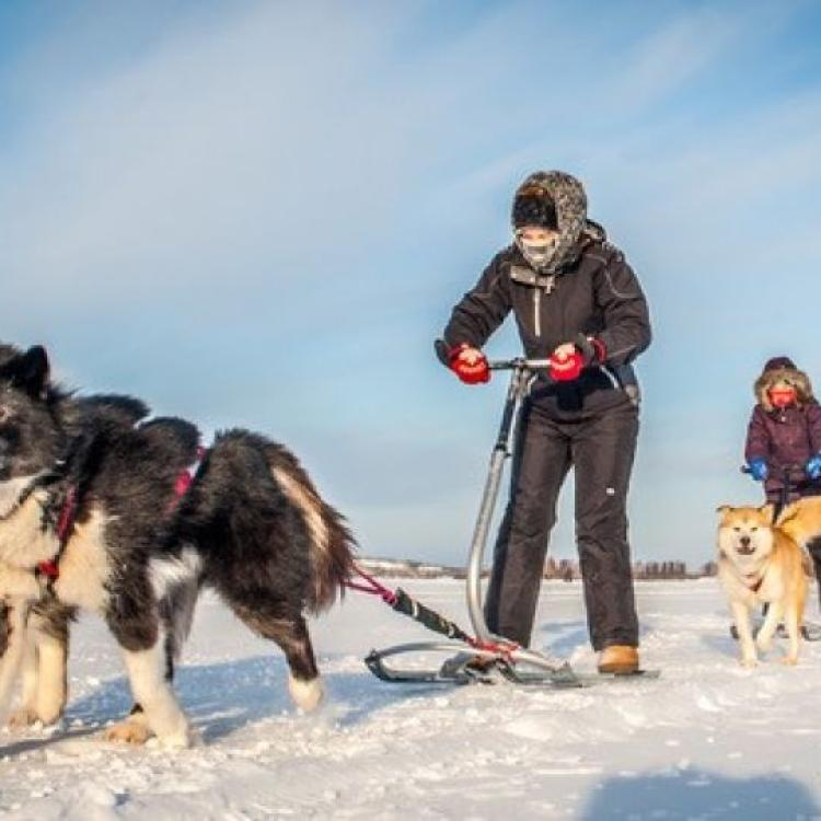 Kicksledding on the frozen Great Slave Lake in winter with two huskies in Yellowknife, NWT.