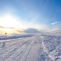 Nature Tours of Yukon - Arctic Discovery Tour  - Road to Tuktoyaktuk