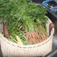 A basket full of freshly picked carrots at Janor Guest house in Fort Simpson.