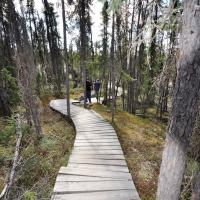 A boardwalk at Prelude Lake on the Ingraham Trail in the NWT