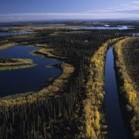Mackenzie River Delta in the Northwest territories