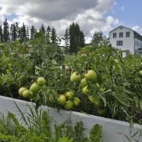 A community garden in Fort Smith, NWT