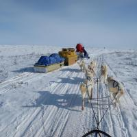 The Arctic Chalet Loon Chalet dog sledding on a snowy trail ski-doo snowmobile transporting supplies in winter Inuvik Northwest Territories.