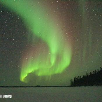 Northern Star B&B and Tourism Services' picture of the purple and green northern lights dancing in the dark sky in Yellowknife, NWT.