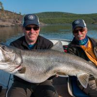 Huge fish caught at Frontier Fishing Lodge held up by two fisherman in the Northwest Territories East arm on great slave lake.