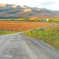 Nature Tours of Yukon Fall Tours to the Arctic with the fall colors and long stretch of road.