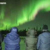 Group of guests of Northern Star Tourism Services looking ahead at the green aurora in the Yellowknife night sky.