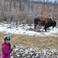 Arctic Tours Canada woman holding camera smiling behind her is a muscox buffalo in the Northwest Territories.