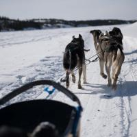 Arctic Tours Canada dog sledding in winter in Yellowknife, Northwest Territories.