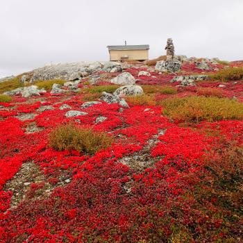 Aylmer Lake Lodge red flora in the barrenlands in the Northwest Territories.