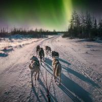 North of 60 Adventures dog sledding mushing in the winter with a dog team and aurora in the sky in the NWT.