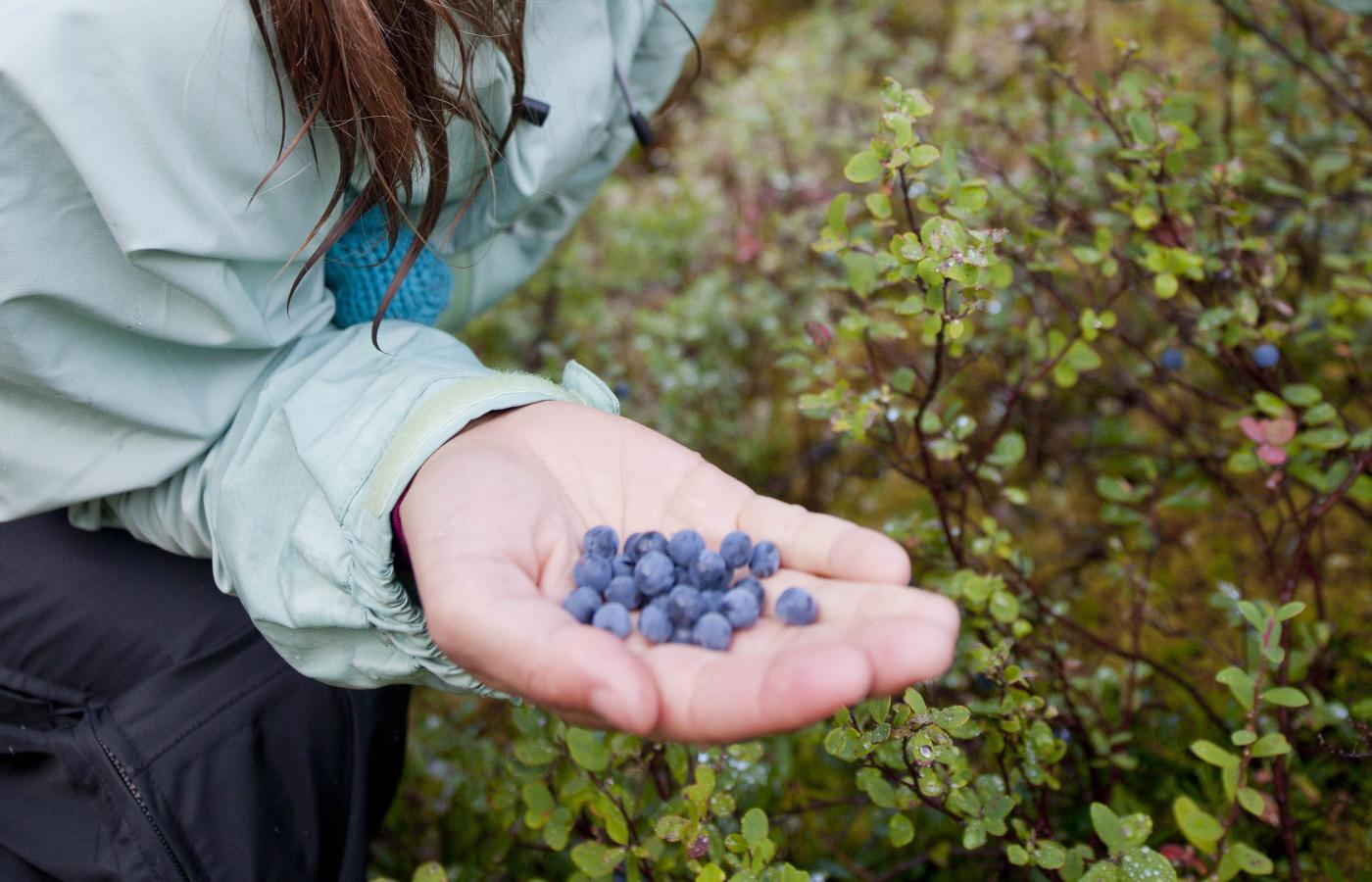 Autumn is prime berry-picking time in the Northwest Territories