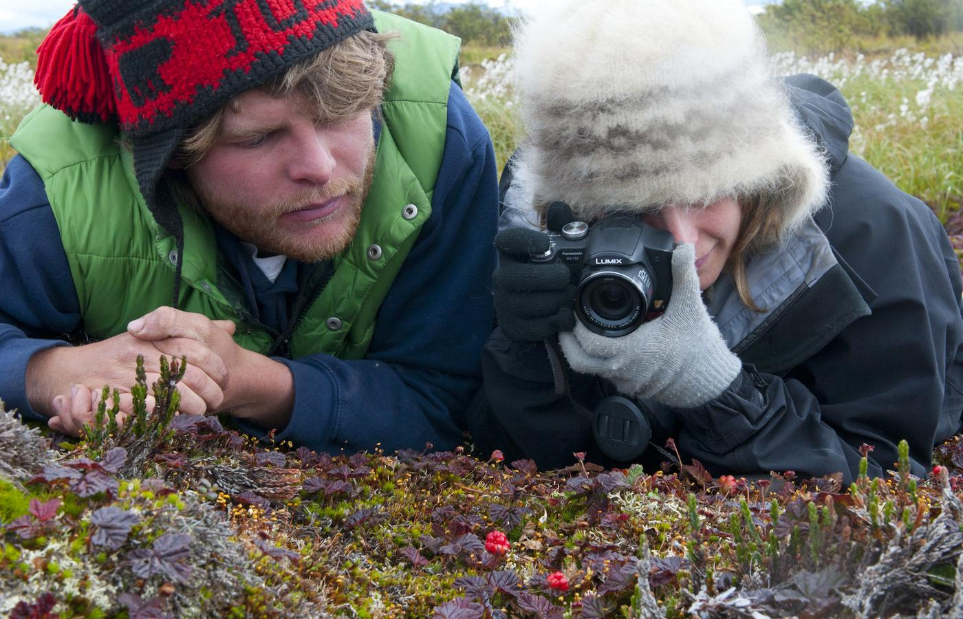 close-up photography in the barrenlands
