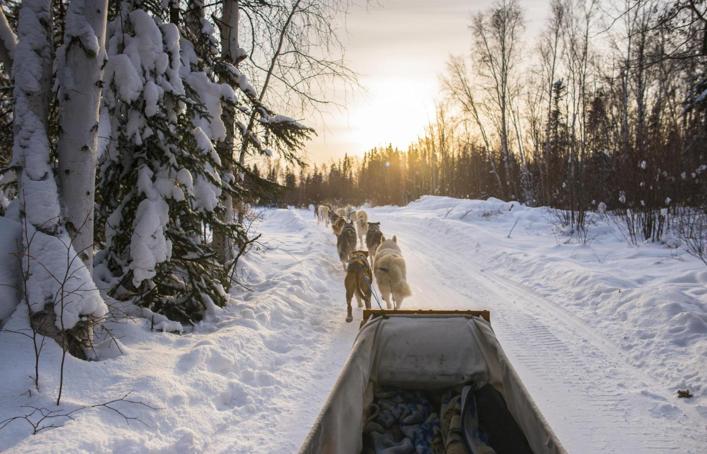 dogsledding though boreal forest trail