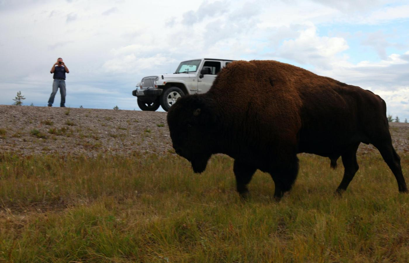 Nature Photography of a Bison in the NWT