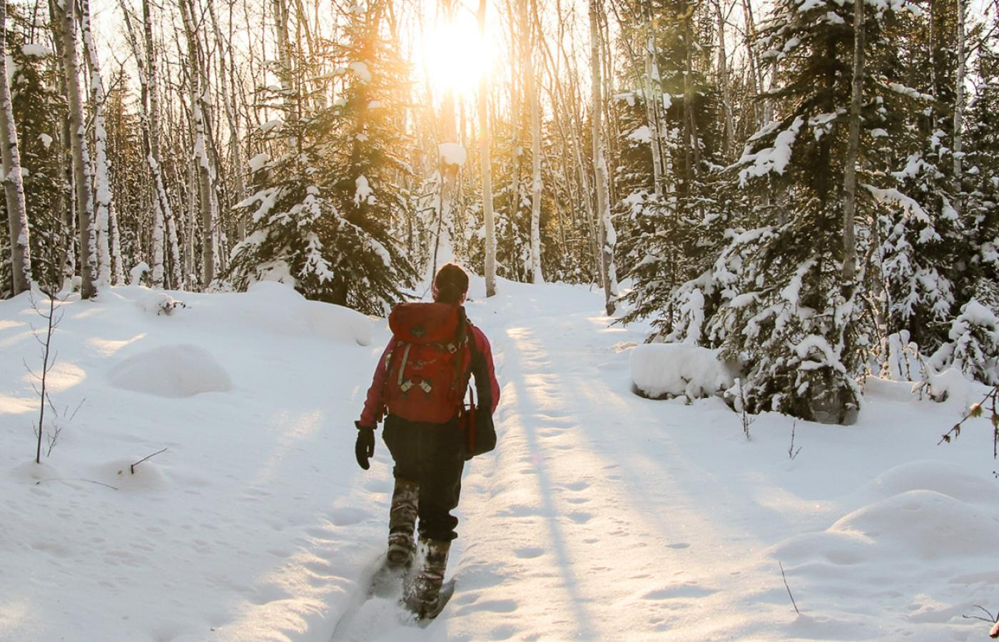 Snowshoeing in the NWT through snowy trees