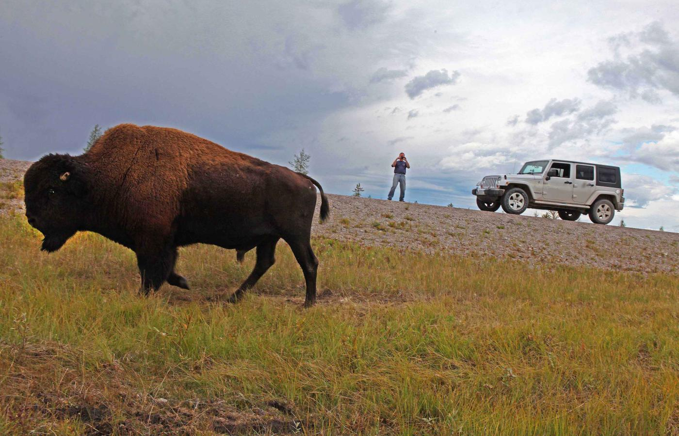 A bison standing on the edge of Highway 1 in the NWT
