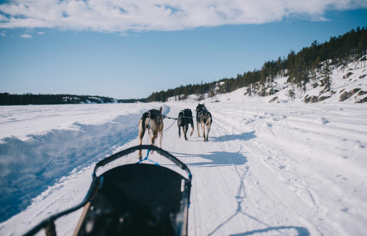 A dogsled ride on Yellowknife Bay