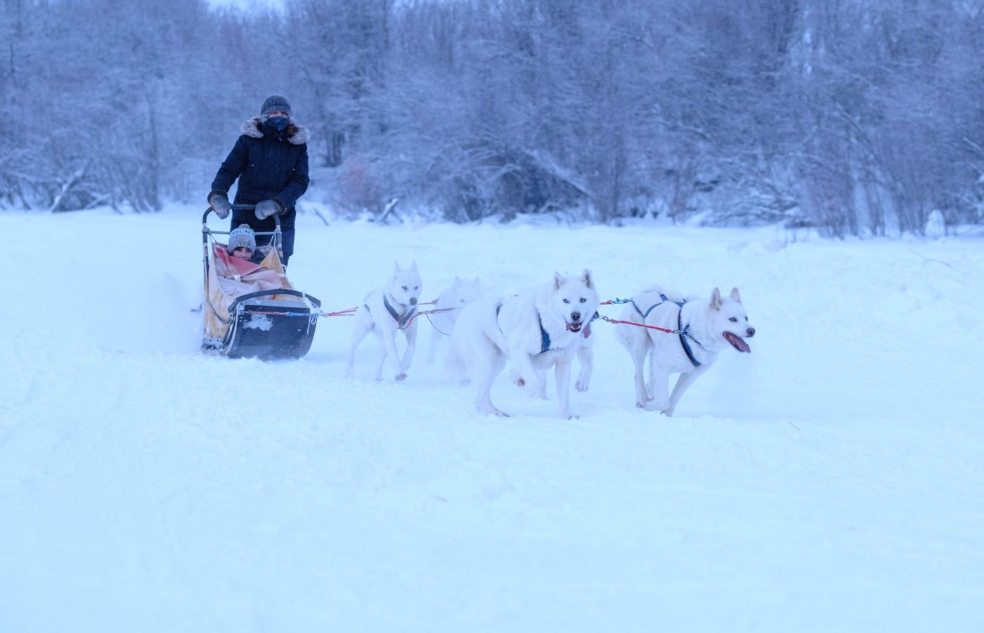 A person drives a child in a dog sled with a team of huskies in Inuvik, Northwest Territories