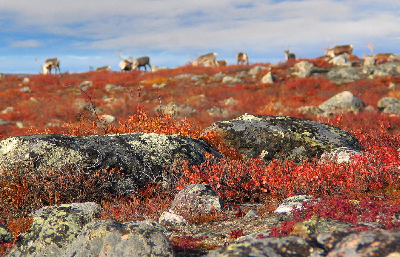 The Barrenlands explode with colour in the fall in Canada's Northwest Territories
