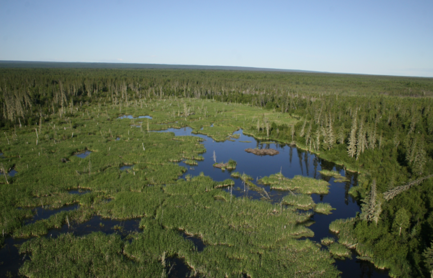 Wood Buffalo National Park is where you'll find the world's largest beaver dam