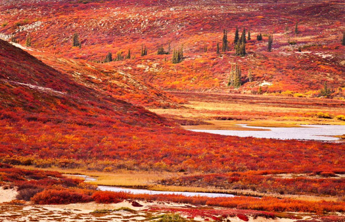 The stunning colours on the Barrenlands in the Northwest Territories
