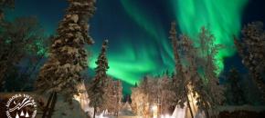 Aurora Village Yellowknife-Trees