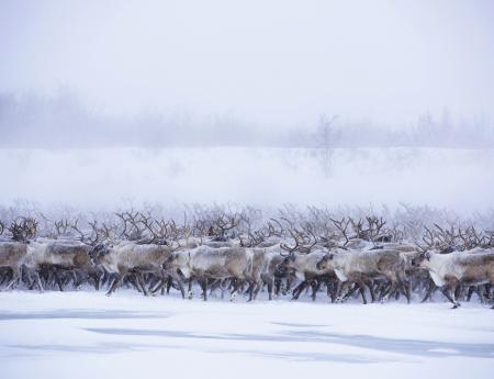 Come witness the great migration